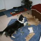 """unser Hund beim """"spielen"""""""