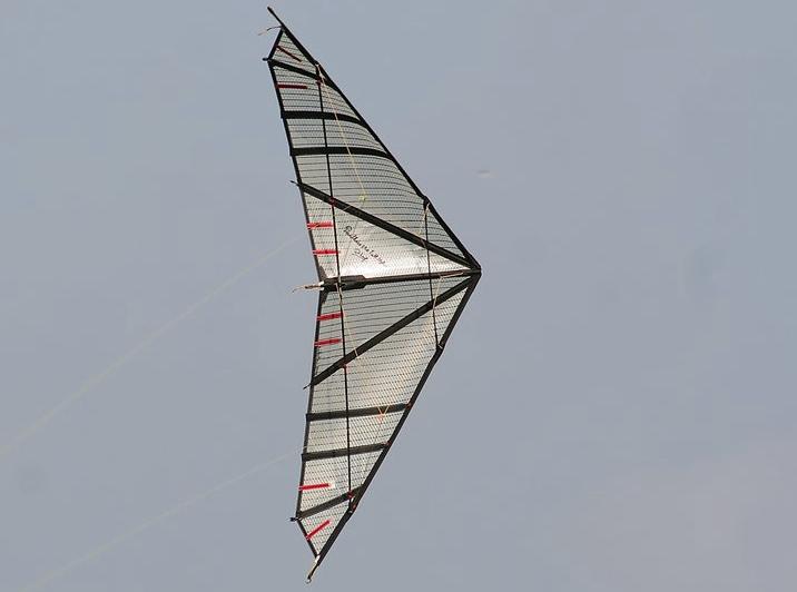 Panthère II Full Mylar by Long Duong