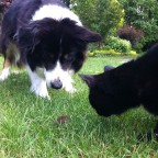 Hund und Katze bei der Mäusejagd